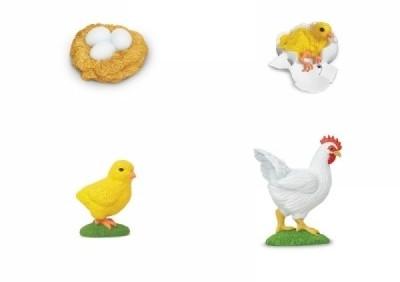 Lebenszyklus Huhn