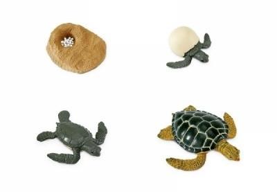 Lebenszyklus Meeresschildkröte