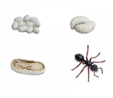 Lebenszyklus Ameise